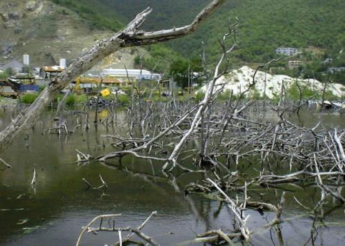 Mangroves Dead