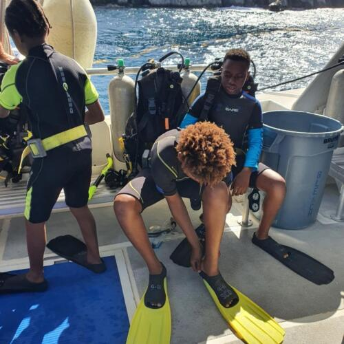 Sea Turtle Aquatics