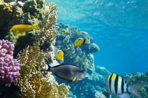 coral-reef-PDCS9J8