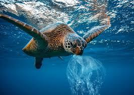 marine litter pic turtle